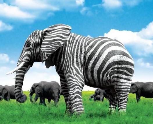 Elephant Stiped - Copy